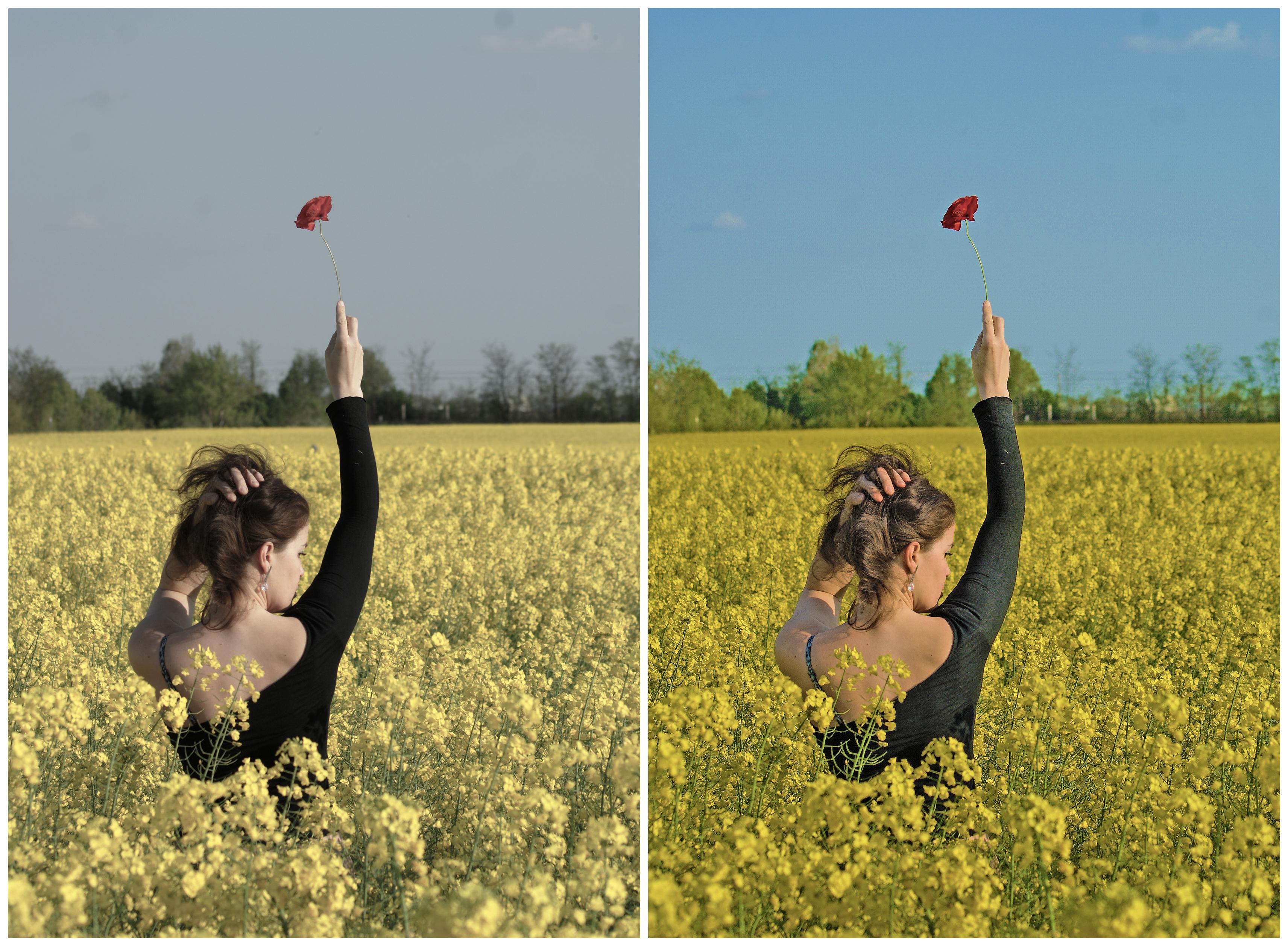 La Belle et la fleur